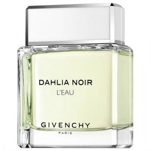 DAHLIA NOIR (L) 50..